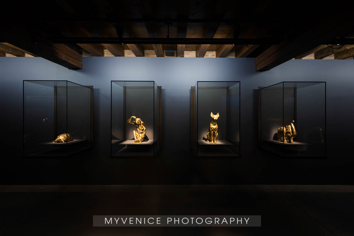 Myvenicephotography47